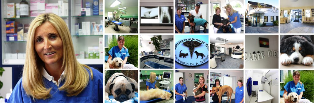 Über uns Tierarzt Tulln